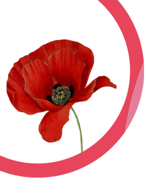 Remembrance Sunday | Be Momentful