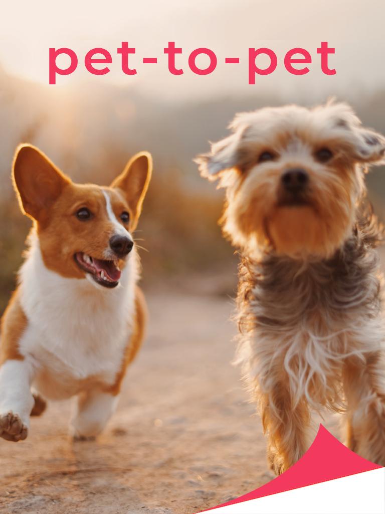 Pet to Pet